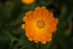 Blumen auf Natur Lizenzfreies Stockfoto