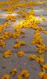 Blumen auf Pflasterung Stockfotos