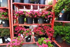 Blumen auf Regalen stockbild