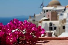 Blumen auf Sanorini Lizenzfreie Stockfotos