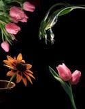 Blumen auf Schwarzem Stockbild