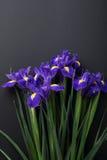 Blumen auf schwarzem Hintergrund Stockbilder