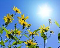 Blumen auf Sonne Stockfotografie