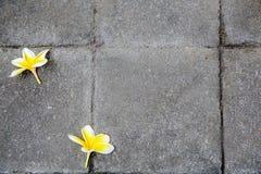 Blumen auf Steinboden Stockbilder