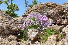 Blumen auf Steinen Stockfotografie