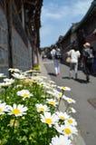 Blumen auf Straßenrand Stockbilder