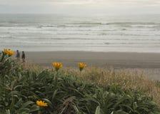 Blumen auf Strand Lizenzfreie Stockfotografie