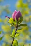Blumen auf unscharfem mehrfarbigem Hintergrund Lizenzfreies Stockbild