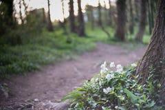 Blumen auf Waldfußweg Lizenzfreies Stockfoto