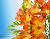 Blumen auf Wasser stockfotos
