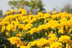 Blumen auf Weiß Lizenzfreie Stockfotos
