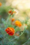 Blumen auf Weiß Lizenzfreies Stockfoto