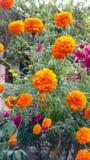 Blumen auf Weiß Lizenzfreies Stockbild