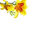 Blumen auf weißem Hintergrund Lizenzfreie Stockfotos