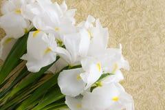 Blumen auf Weinlesegoldhintergrund Stockbilder