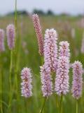 Blumen auf Wiese Lizenzfreies Stockbild