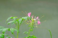 Blumen, Bäume, Natur, verschiedene Farben der Hintergründe Stockfoto