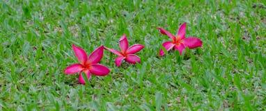 Blumen, Bäume, Natur, verschiedene Farben der Hintergründe Stockfotos