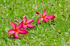 Blumen, Bäume, Natur, verschiedene Farben der Hintergründe Lizenzfreie Stockbilder