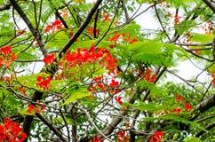 Blumen, Bäume, Natur, verschiedene Farben der Hintergründe Lizenzfreie Stockfotografie