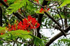 Blumen, Bäume, Natur, verschiedene Farben der Hintergründe Stockbilder