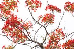 Blumen, Bäume, Natur, verschiedene Farben der Hintergründe Stockfotografie