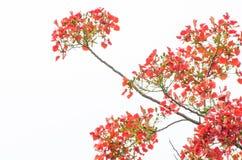 Blumen, Bäume, Natur, verschiedene Farben der Hintergründe Lizenzfreies Stockbild