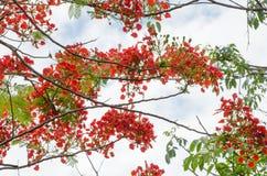 Blumen, Bäume, Natur, verschiedene Farben der Hintergründe Stockbild
