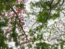 Blumen, Bäume, Natur, verschiedene Farben der Hintergründe Lizenzfreie Stockfotos