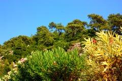 Blumen, Bäume u. Berge Stockbilder
