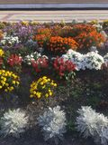 Blumen am Bahnhof Stockfotografie