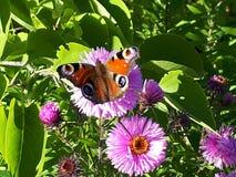 Blumen Basisrecheneinheit Herbst Grün Auge lizenzfreies stockbild