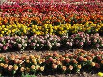 Blumen-Bauernhof Stockfotos