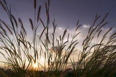 Blumen bedecken mit Himmelsonnenunterganghintergrund im Winter mit Gras Lizenzfreies Stockbild