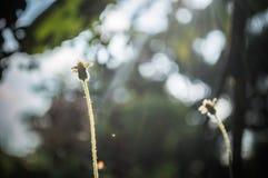 Blumen bedecken und Licht des Sonnenscheins mit Gras Stockbilder