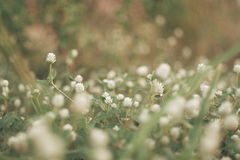 Blumen bedecken unscharfen bokeh Hintergrund mit Gras Lizenzfreie Stockfotos