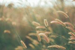 Blumen bedecken unscharfen Hintergrund mit Gras Stockfoto