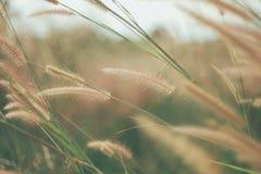 Blumen bedecken unscharfen Hintergrund mit Gras Lizenzfreie Stockfotos