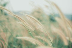 Blumen bedecken unscharfen Hintergrund mit Gras Stockfotos