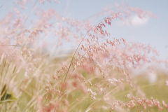 Blumen bedecken unscharfen Hintergrund mit Gras Lizenzfreies Stockbild