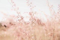 Blumen bedecken unscharfen Hintergrund mit Gras Lizenzfreie Stockfotografie