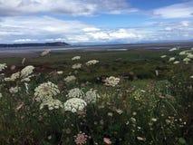 Blumen bei Ebbe, Royston Seaside Trail, Royston, BC Lizenzfreie Stockbilder