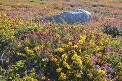 Blumen bei Pointe du Millier in Frankreich stockfotos