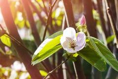 Blumen bei Sonnenaufgang Lizenzfreies Stockfoto