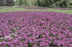 Blumen beim Amstelpark Amsterdam niederländische 2018 lizenzfreies stockfoto
