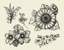 Blumen Übergeben Sie gezogene Skizzenblume, Sonnenblume, die weiße Lilie, violett Auch im corel abgehobenen Betrag Lizenzfreie Stockbilder