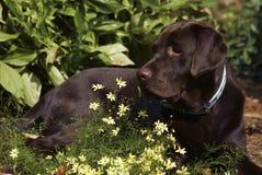 Blumen-Bett Stockfotografie
