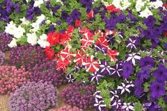 Blumen-Bett lizenzfreies stockbild