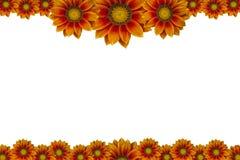 Blumen-Bilderrahmen lokalisiert auf weißem Hintergrund Stockbilder