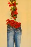 Blumen-Bildschirmanzeige lizenzfreies stockbild